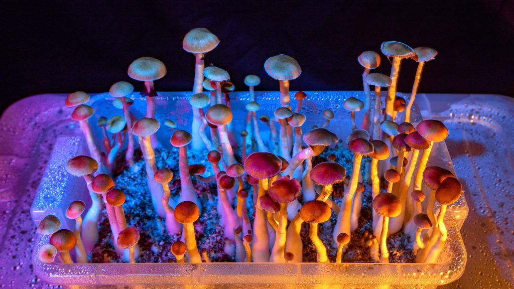 Treat your mental problems with the online shroom