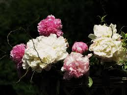 Is There Any Variety Available In Condolence Flower?