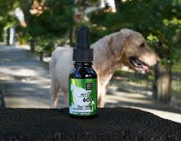 CBD for Dogs: What You Need to Know